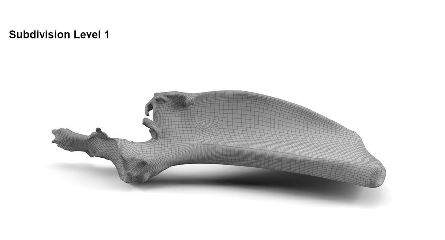 Bone royalty-free 3d model - Preview no. 8
