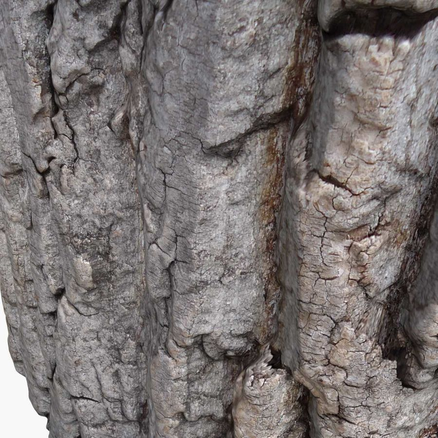Bark 3 - Oak royalty-free 3d model - Preview no. 5