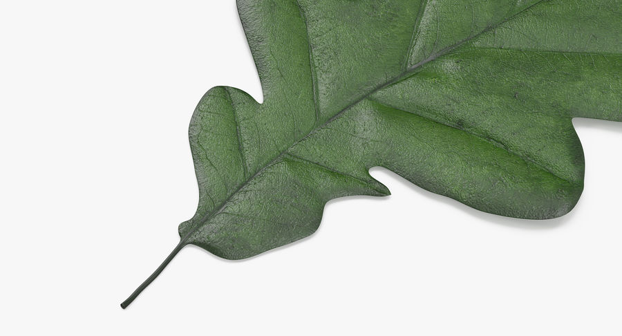 Foglia di quercia 02 verde royalty-free 3d model - Preview no. 10