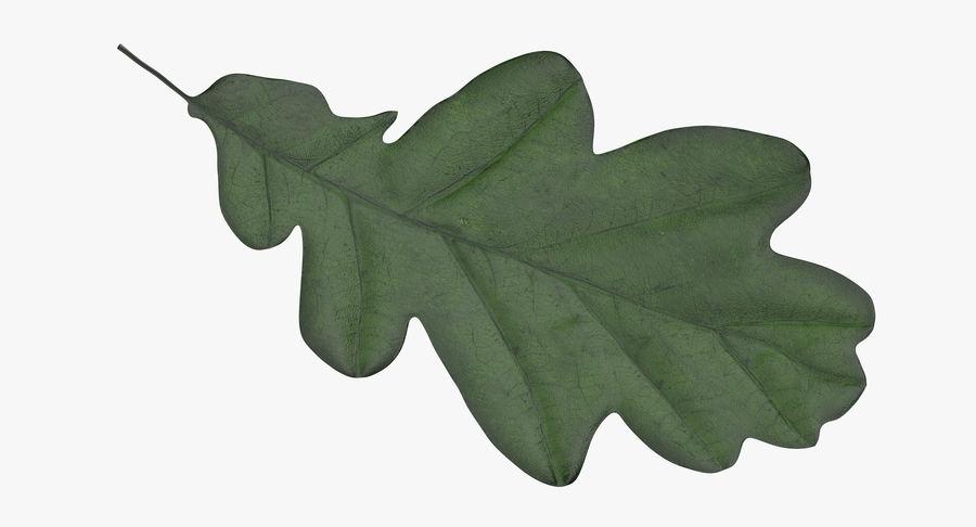 Foglia di quercia 02 verde royalty-free 3d model - Preview no. 8