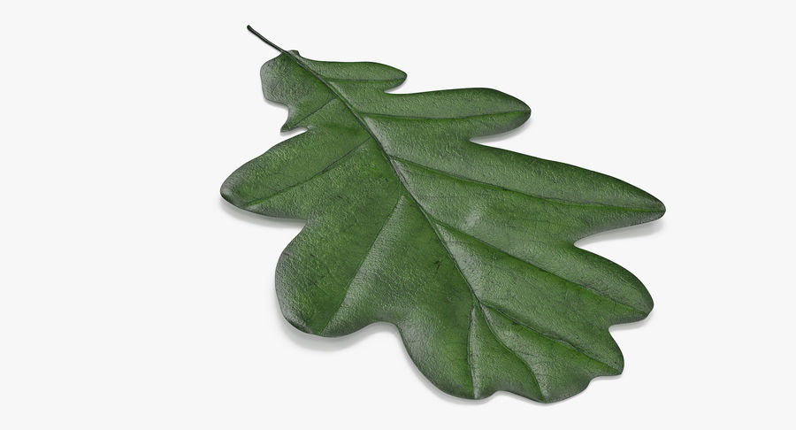 Foglia di quercia 02 verde royalty-free 3d model - Preview no. 5