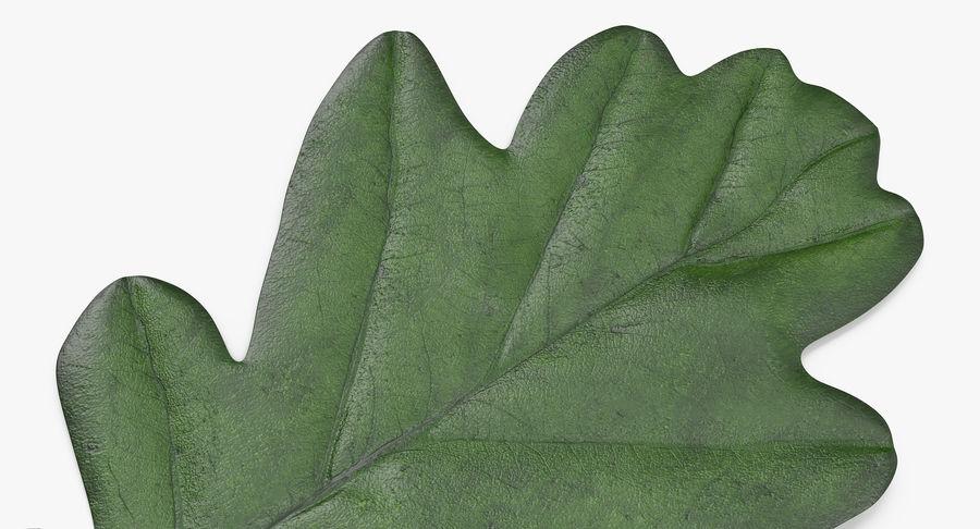 Foglia di quercia 02 verde royalty-free 3d model - Preview no. 11