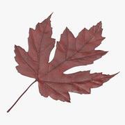 Maple Leaf 01 Red 3d model