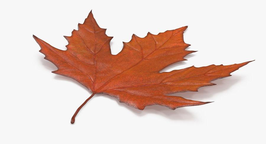 Maple Leaf 02 Orange royalty-free 3d model - Preview no. 8