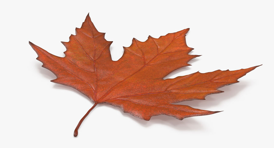 Maple Leaf 02 Orange royalty-free 3d model - Preview no. 5