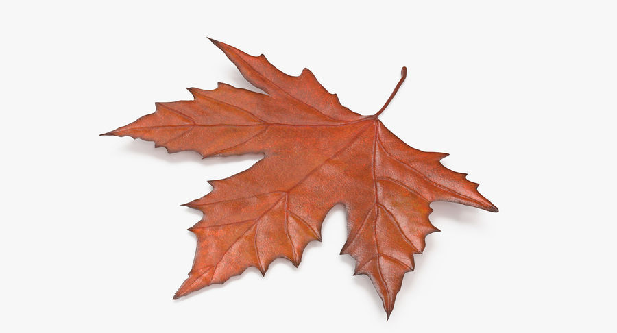Maple Leaf 02 Orange royalty-free 3d model - Preview no. 3