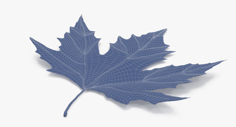 Maple Leaf 02 Orange royalty-free 3d model - Preview no. 15