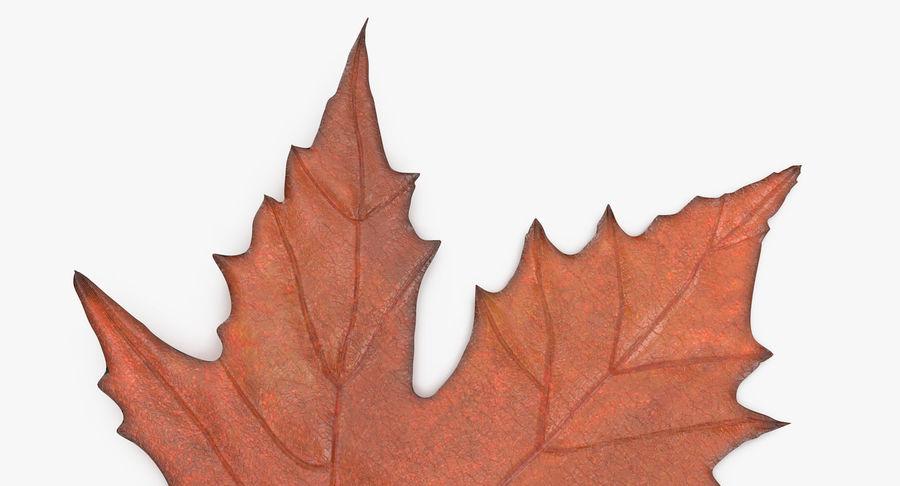 Maple Leaf 02 Orange royalty-free 3d model - Preview no. 10