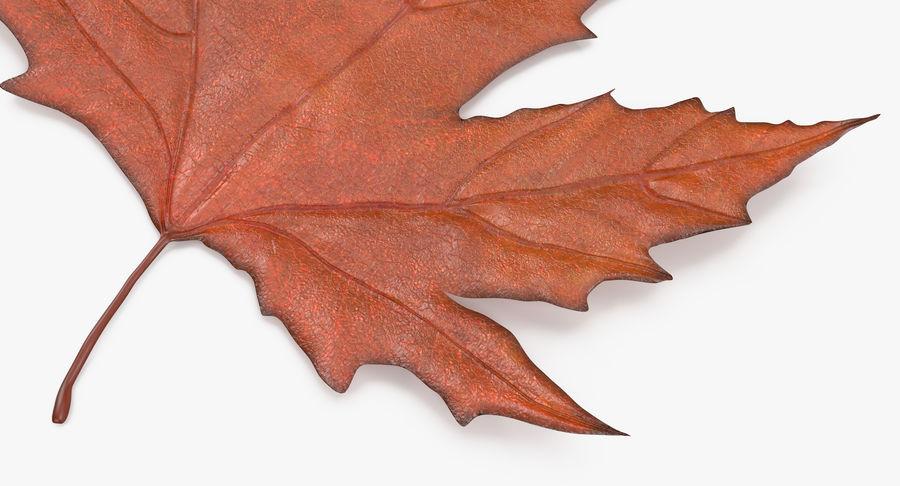 Maple Leaf 02 Orange royalty-free 3d model - Preview no. 9