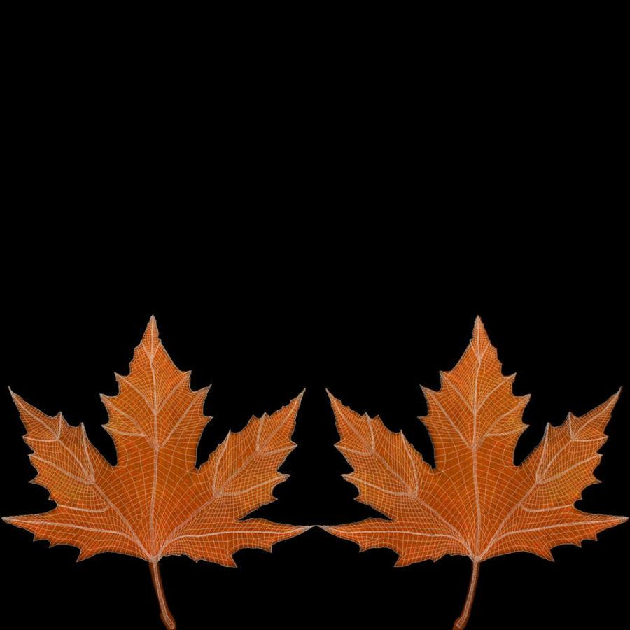 Maple Leaf 02 Orange royalty-free 3d model - Preview no. 21