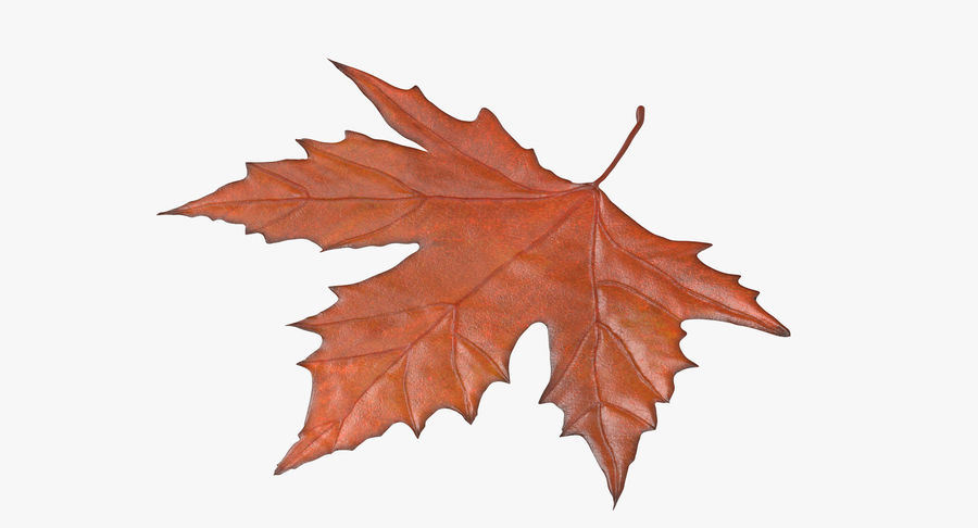 Maple Leaf 02 Orange royalty-free 3d model - Preview no. 2