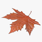 Maple Leaf 02 Orange 3d model