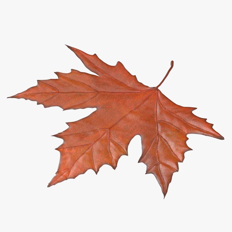 Maple Leaf 02 Orange royalty-free 3d model - Preview no. 1