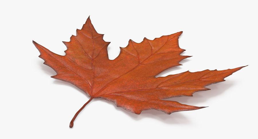 Maple Leaf 02 Orange royalty-free 3d model - Preview no. 7