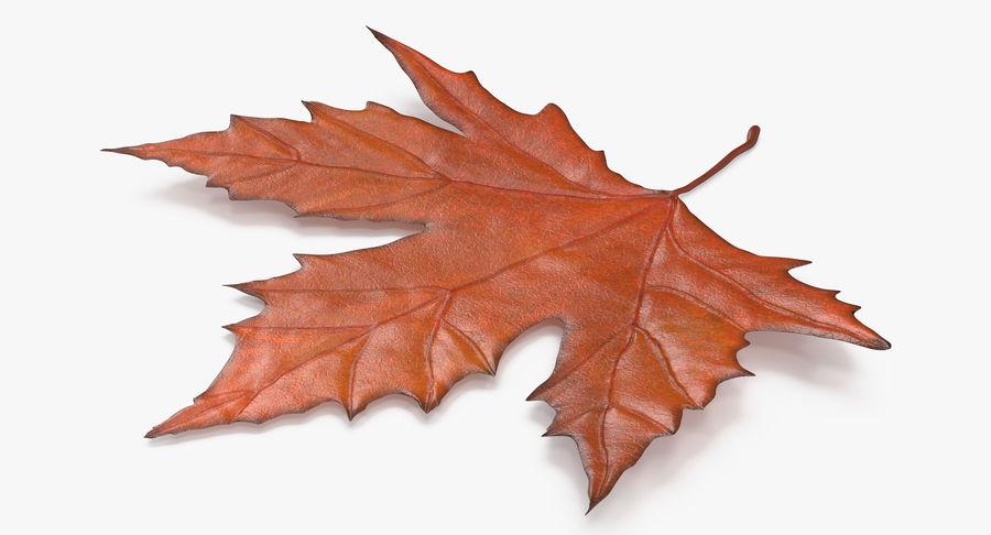 Maple Leaf 02 Orange royalty-free 3d model - Preview no. 4