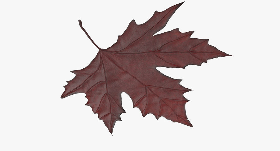 Maple Leaf 02 Red royalty-free 3d model - Preview no. 6