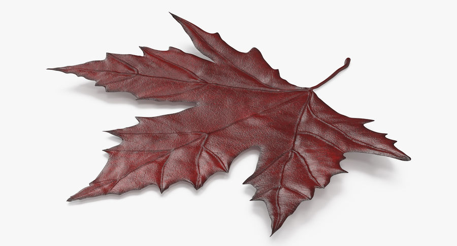 Maple Leaf 02 Red royalty-free 3d model - Preview no. 4