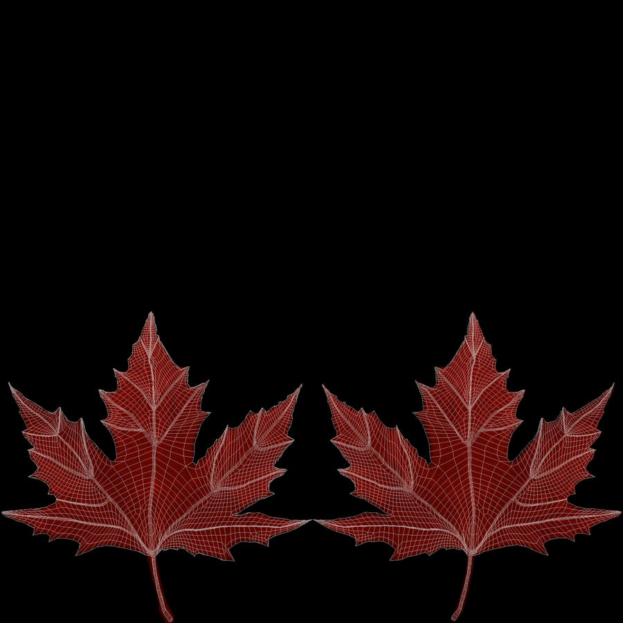 Maple Leaf 02 Red royalty-free 3d model - Preview no. 21