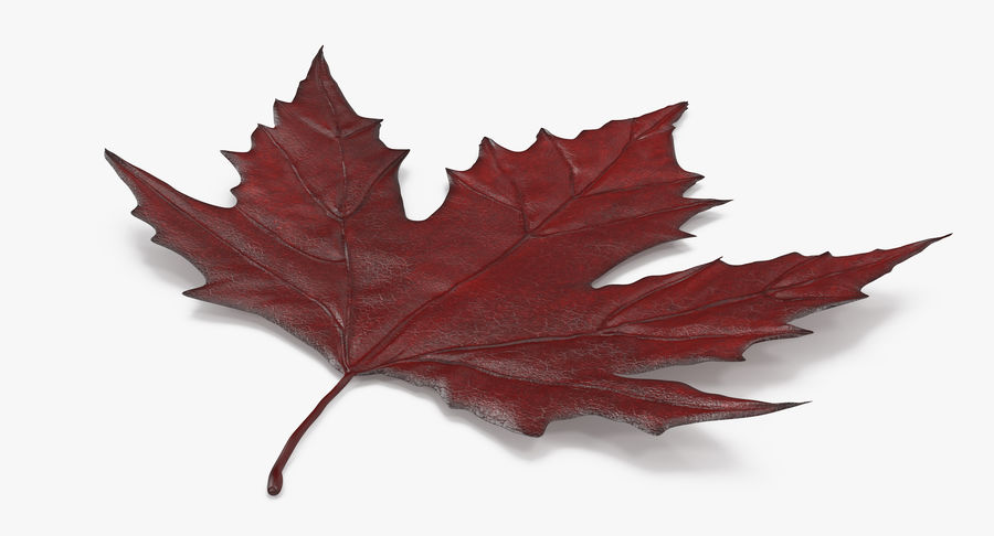 Maple Leaf 02 Red royalty-free 3d model - Preview no. 5
