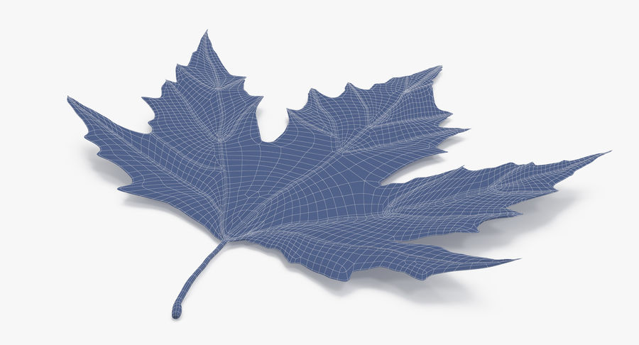 Maple Leaf 02 Red royalty-free 3d model - Preview no. 13