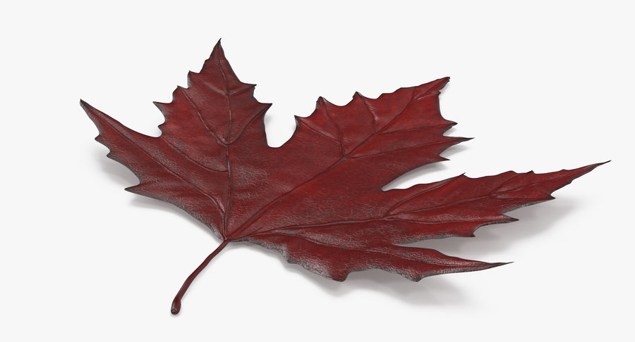 Maple Leaf 02 Red royalty-free 3d model - Preview no. 7