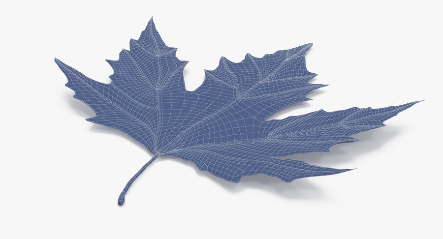 Maple Leaf 02 Red royalty-free 3d model - Preview no. 16