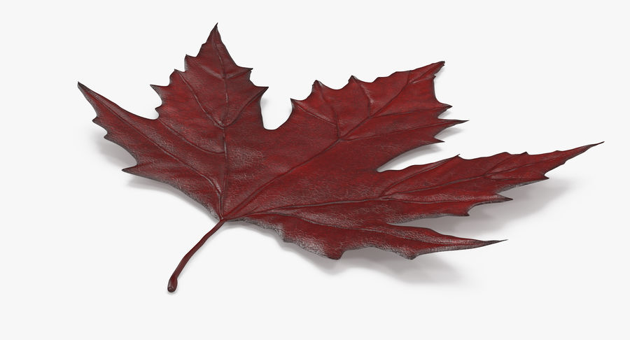 Maple Leaf 02 Red royalty-free 3d model - Preview no. 8