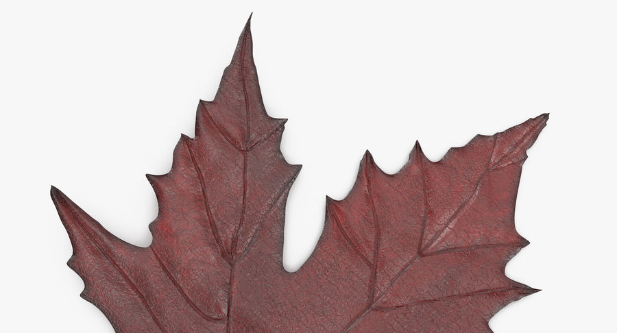 Maple Leaf 02 Red royalty-free 3d model - Preview no. 10