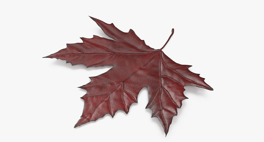 Maple Leaf 02 Red royalty-free 3d model - Preview no. 3