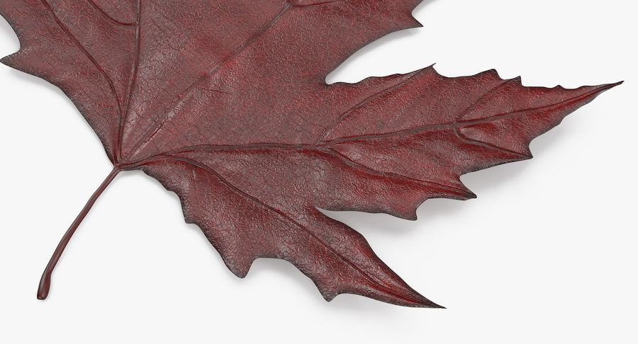 Maple Leaf 02 Red royalty-free 3d model - Preview no. 9