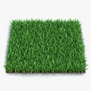 Saint Augustine Warm Season Grass 3d model
