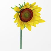 sunflower1 3d model
