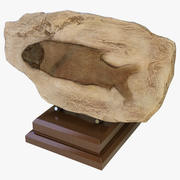 化石の魚 3d model
