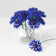 cornflowers 3d model