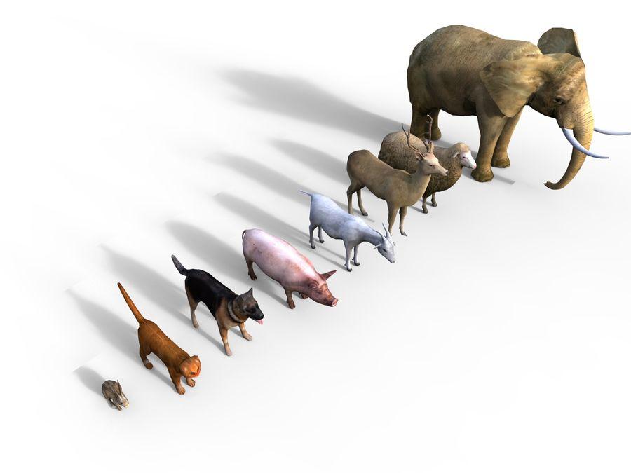 Kolekcja zwierząt royalty-free 3d model - Preview no. 9