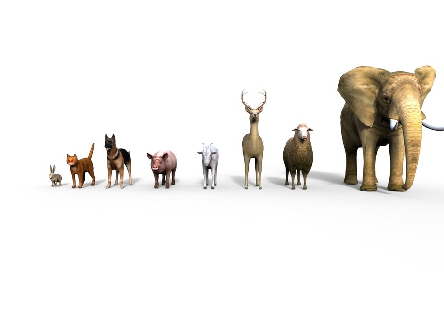 Kolekcja zwierząt royalty-free 3d model - Preview no. 4