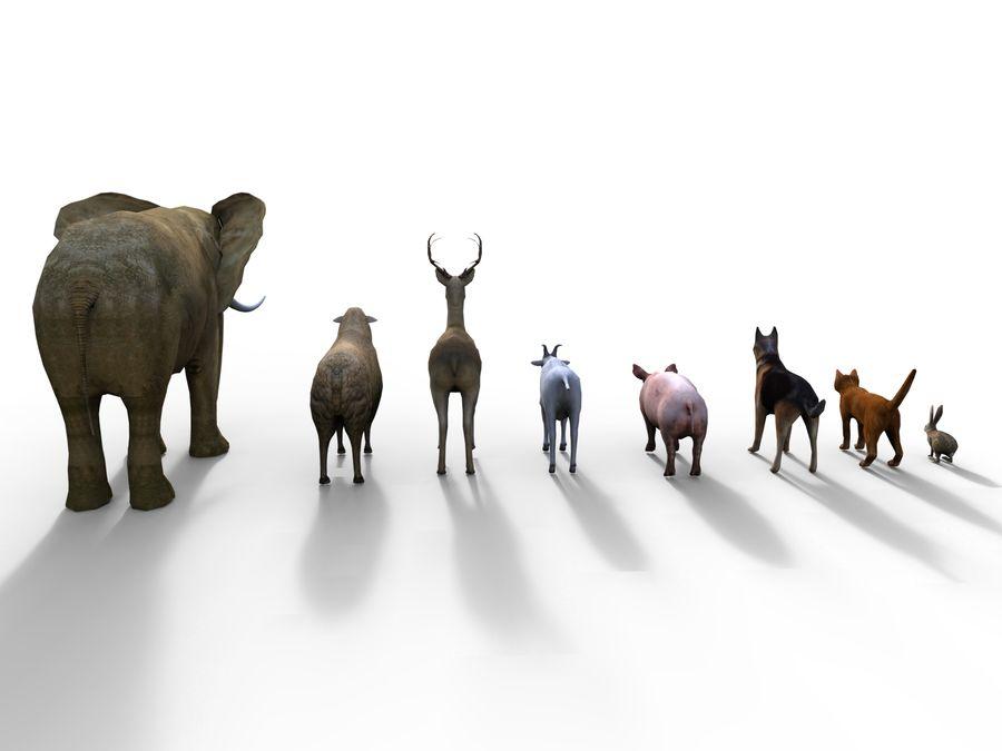 Kolekcja zwierząt royalty-free 3d model - Preview no. 7