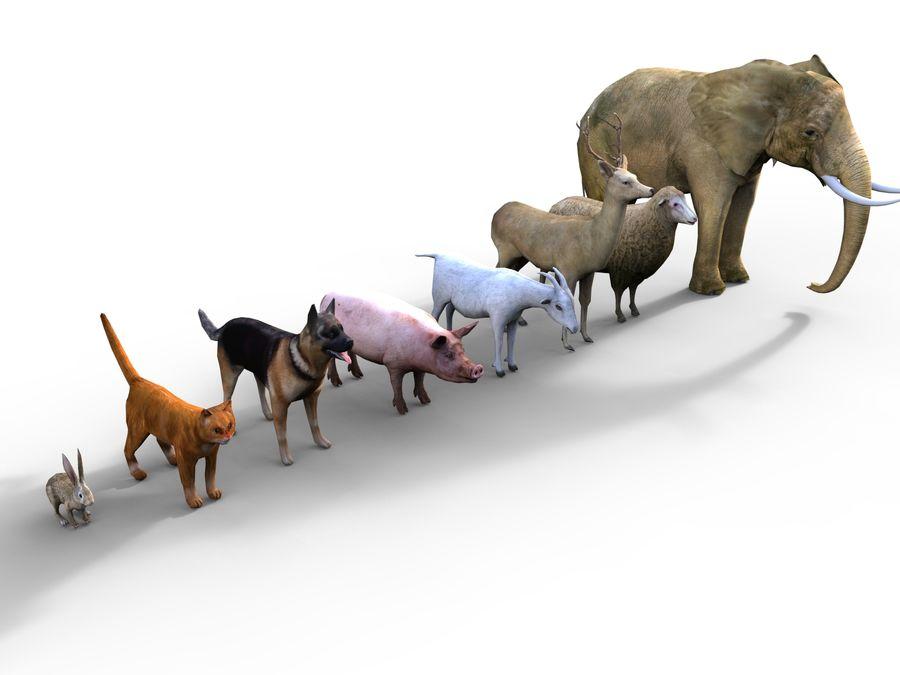 Kolekcja zwierząt royalty-free 3d model - Preview no. 3