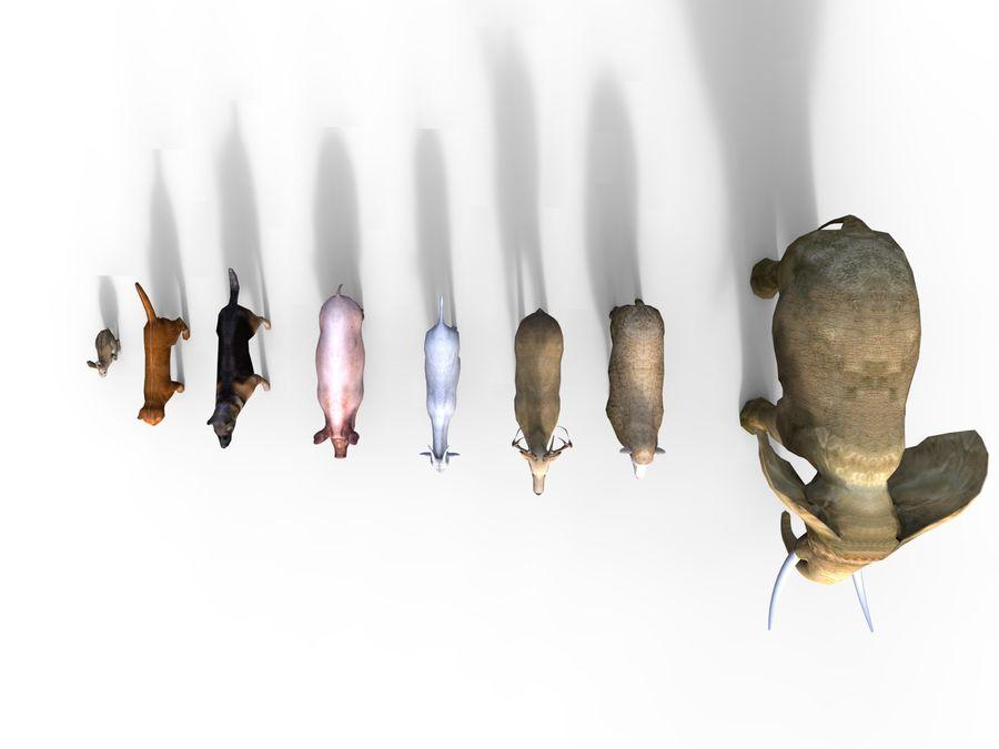 Kolekcja zwierząt royalty-free 3d model - Preview no. 5