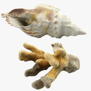 Seashell and Coral 3d model