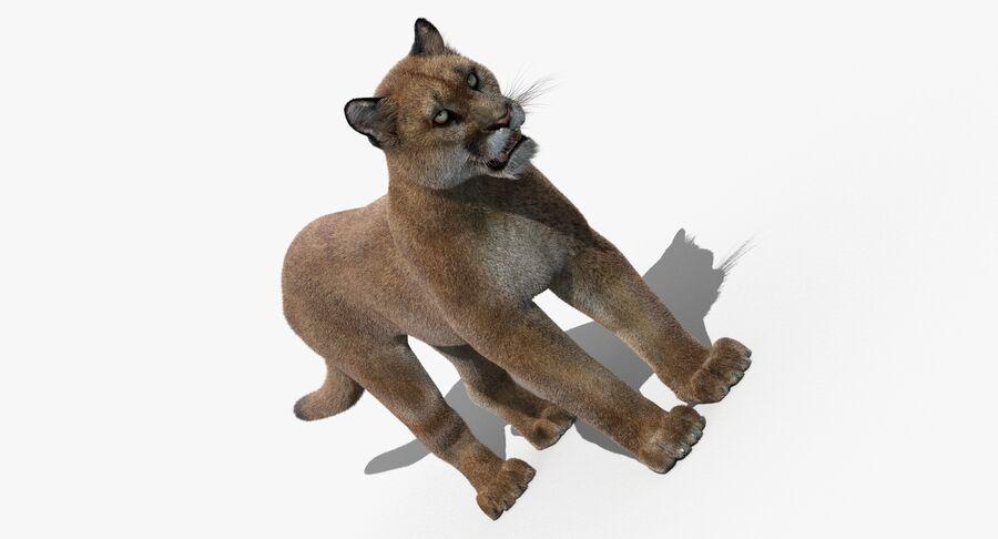 Puma (Fur) royalty-free 3d model - Preview no. 5