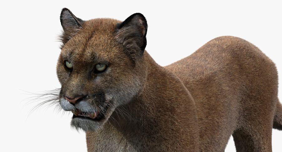 Puma (Fur) royalty-free 3d model - Preview no. 11