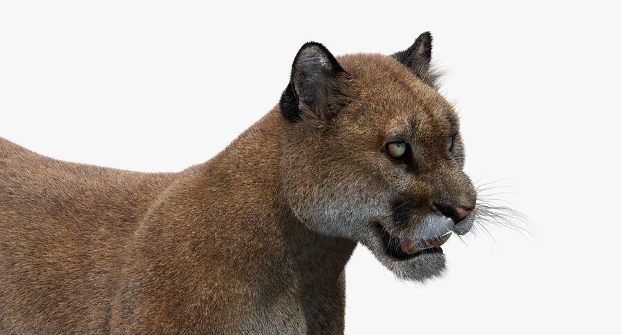 Puma (Fur) royalty-free 3d model - Preview no. 13