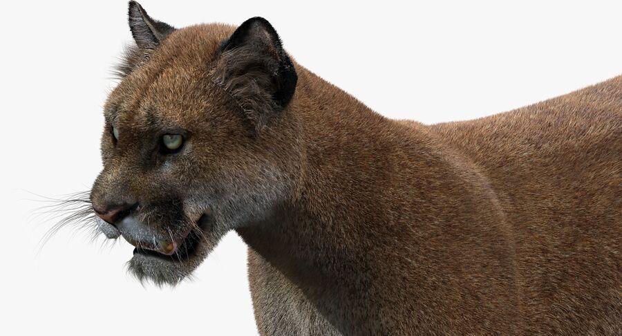 Puma (Fur) royalty-free 3d model - Preview no. 12