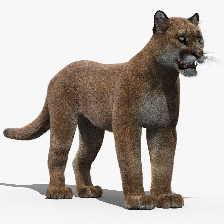 Puma (Fur) royalty-free 3d model - Preview no. 1