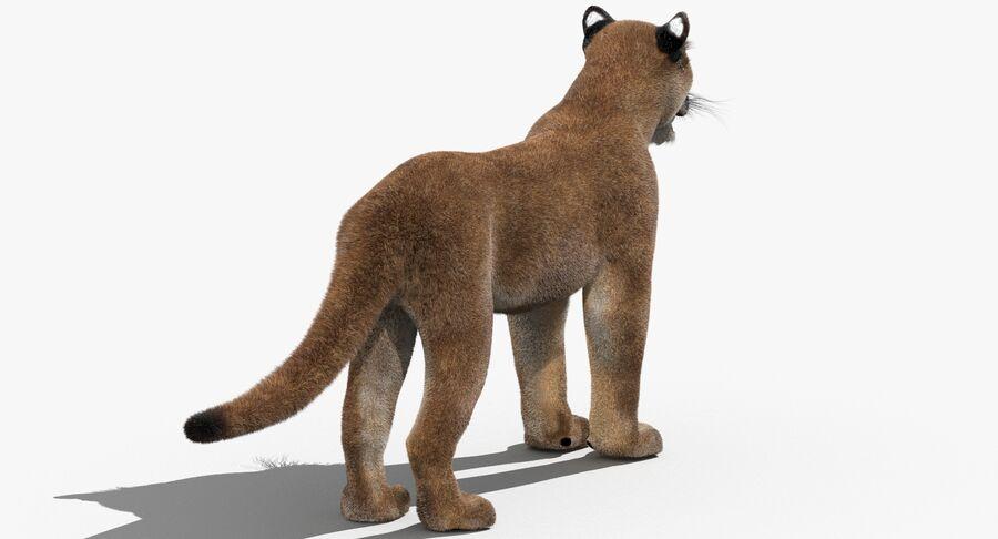 Puma (Fur) royalty-free 3d model - Preview no. 9