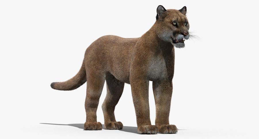 Puma (Fur) royalty-free 3d model - Preview no. 2