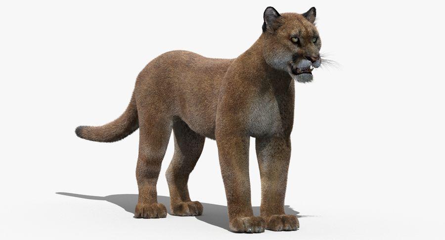 Puma (Fur) royalty-free 3d model - Preview no. 4