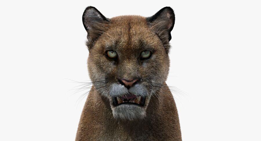 Puma (Fur) royalty-free 3d model - Preview no. 14
