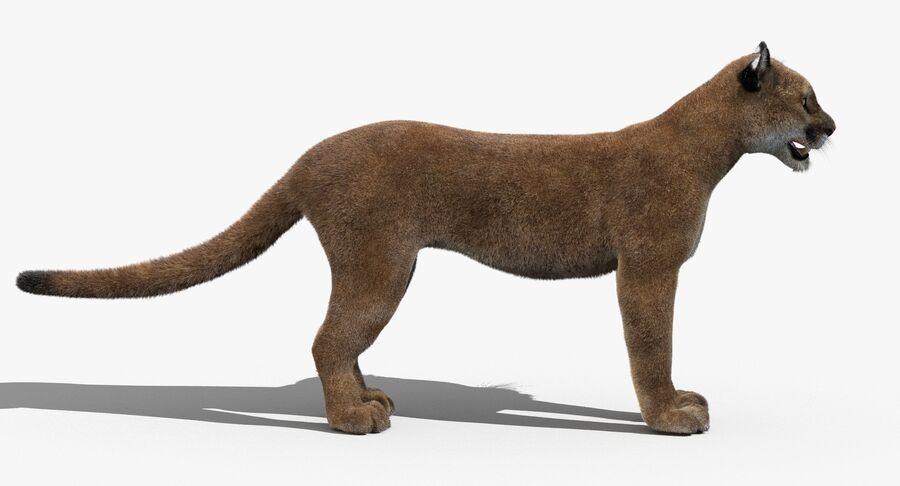 Puma (Fur) royalty-free 3d model - Preview no. 6